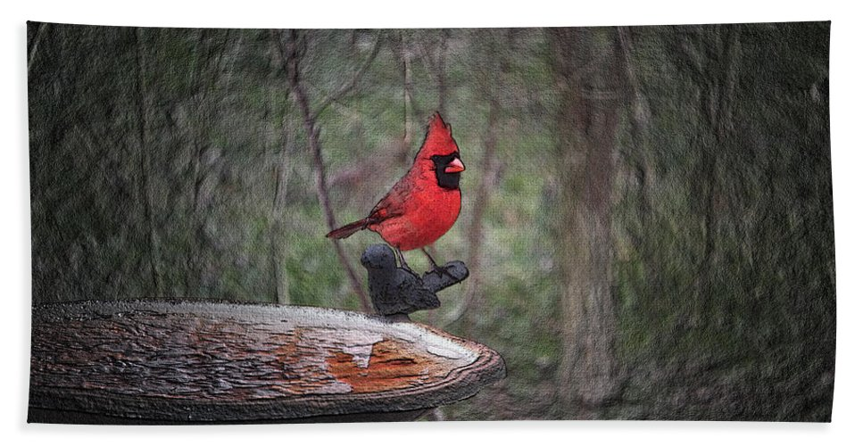 Cardinal Beach Towel featuring the photograph Come Here Often 2012-02-22 by Ericamaxine Price