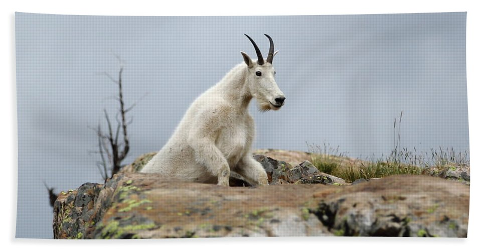 Mountain Goat Beach Towel featuring the photograph Coming Up by David Andersen
