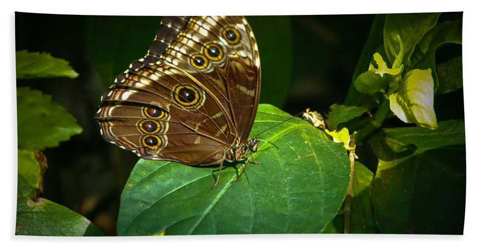 Moth Beach Towel featuring the photograph Common Blue Morpho Moth by Grace Grogan