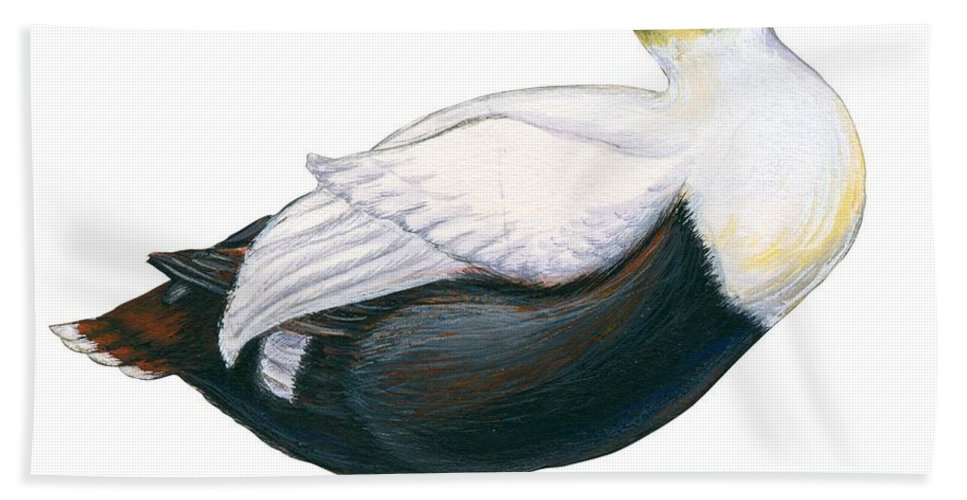 No People; Horizontal; Side View; Full Length; White Background; One Animal; Wildlife; Close Up; Zoology; Illustration And Painting; Bird; Beak; Feather; Web; Animal Pattern; Duck; Common Eider; Somateria Mollissima Beach Towel featuring the drawing Common Eider by Anonymous