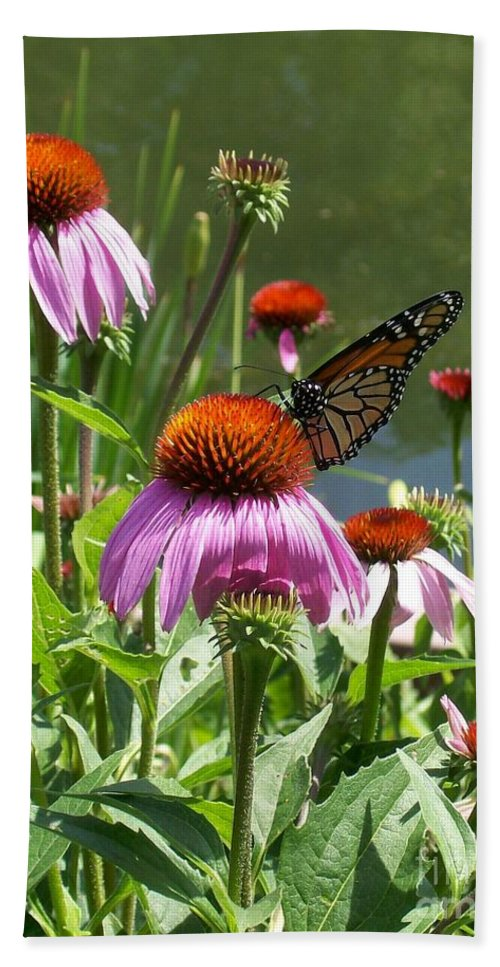 Coneflower Beach Towel featuring the photograph Coneflower With Butterfly by Laurie Eve Loftin