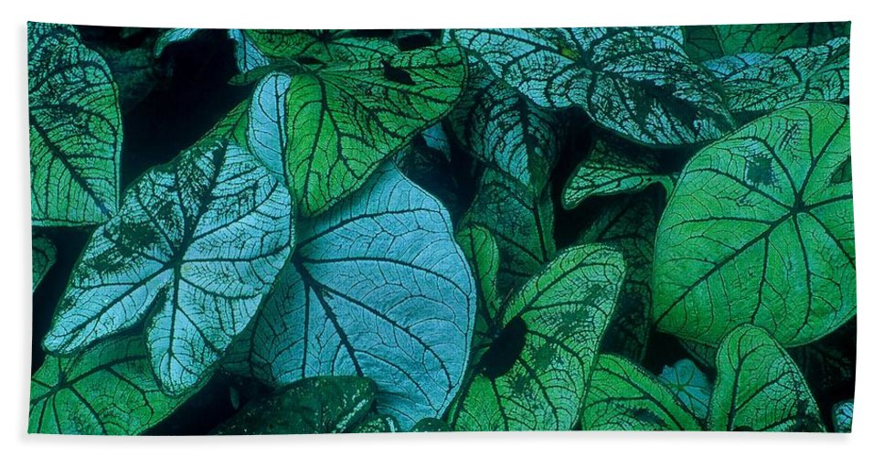 Fine Art Beach Towel featuring the photograph Cool Leafy Green by Rodney Lee Williams