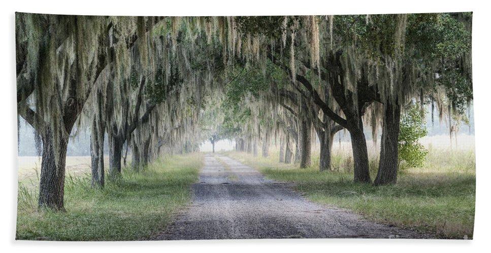 Fog Beach Towel featuring the photograph Coosaw Fog Avenue Of Oaks by Scott Hansen