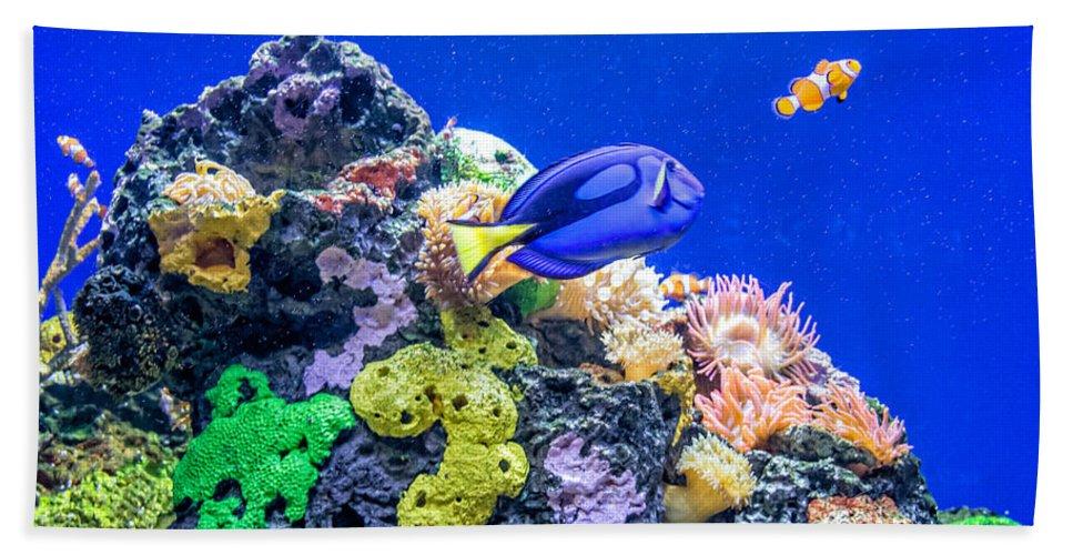 Steve Harrington Beach Towel featuring the photograph Coral Reef by Steve Harrington