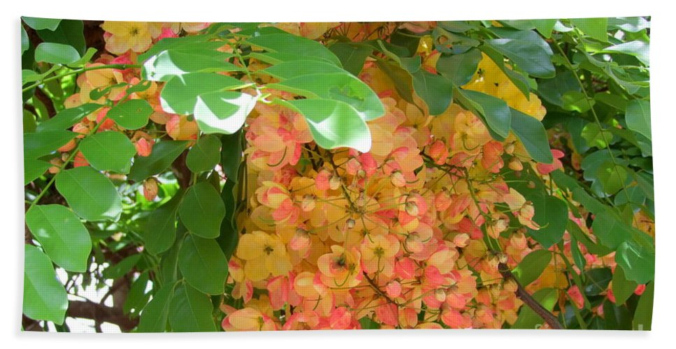 Shower Tree Beach Towel featuring the photograph Coral Shower Tree by Mary Deal