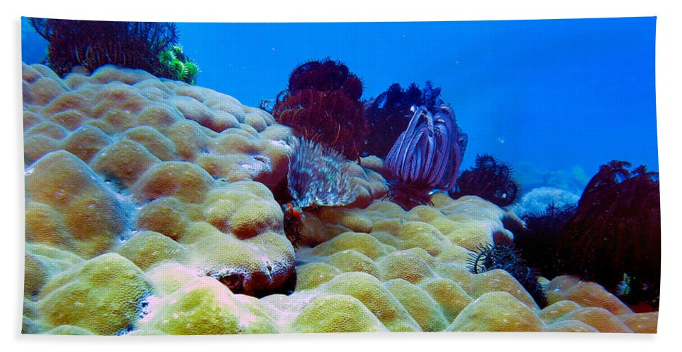 Healthy Corals Beach Towel featuring the photograph Corals Underwater by Paul Ranky