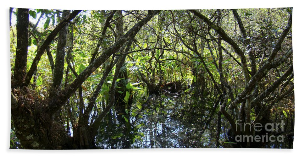 Corkscrew Beach Towel featuring the photograph Corkscrew Swamp 3 by Nancy L Marshall