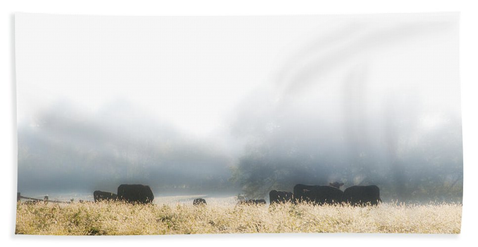 Cows Beach Towel featuring the photograph Cows In A Foggy Field by Bill Cannon
