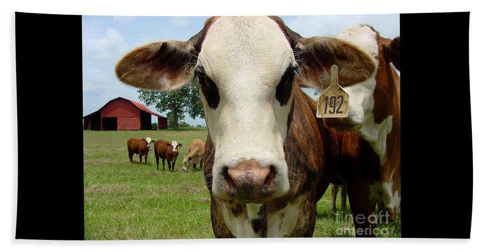 Cow Beach Towel featuring the photograph Cows8957 by Gary Gingrich Galleries