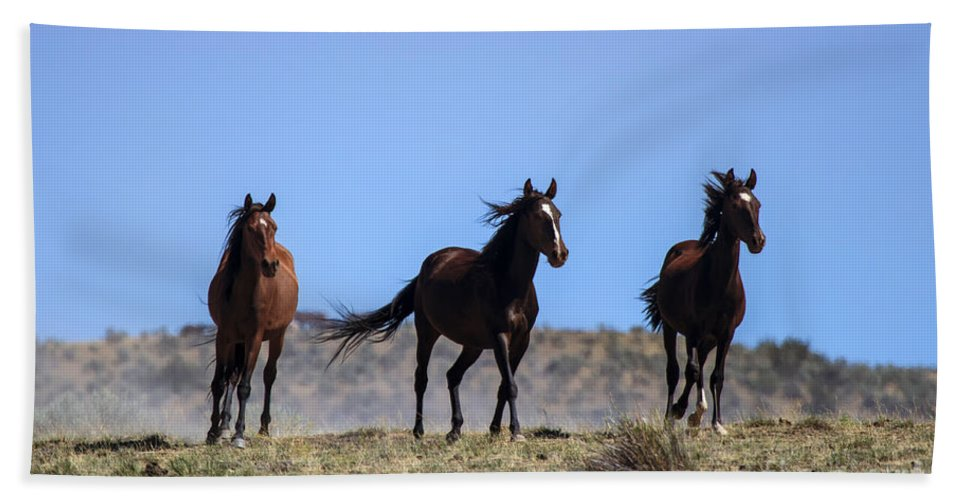 Mustangs Beach Towel featuring the photograph Cresting The Ridge by Mike Dawson