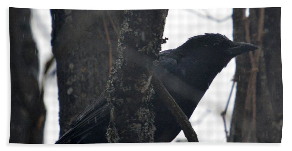 Common Crow Beach Towel featuring the photograph Crow Eye by Thomas Phillips