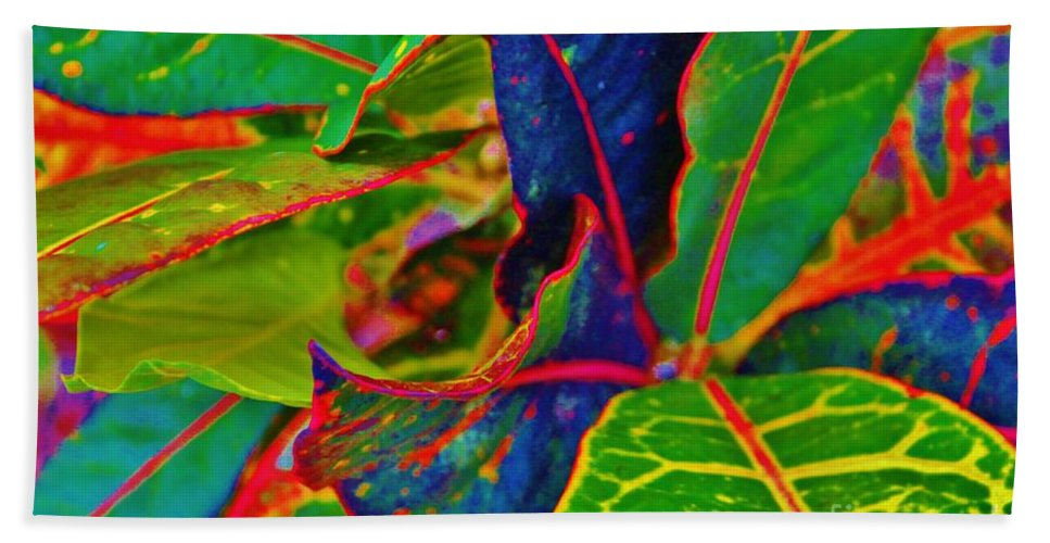 Croton Beach Towel featuring the photograph Cuban Croton by Keri West