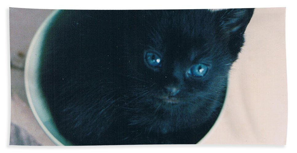 Cat Beach Towel featuring the photograph Cup O'Kitty by Seth Weaver