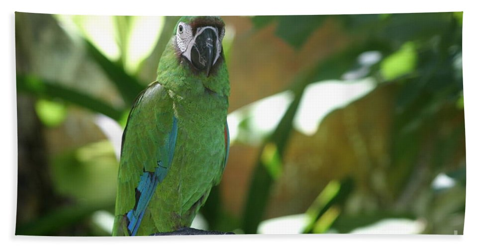 Curacao Beach Towel featuring the photograph Curacao Parrot by Living Color Photography Lorraine Lynch