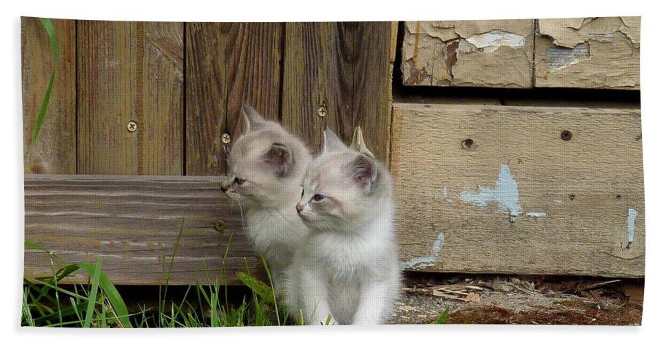 Kittens Beach Towel featuring the photograph Curious Kittens by Rain Shine