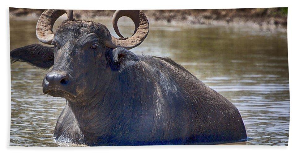 Water Buffalo Beach Towel featuring the photograph Curly Horns by Douglas Barnard