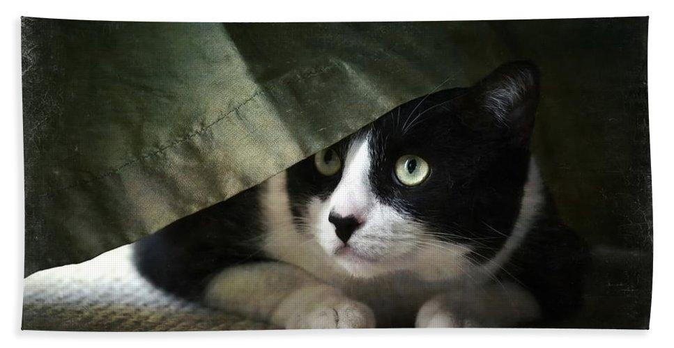 Cat Beach Towel featuring the photograph Curtain Call by Fraida Gutovich