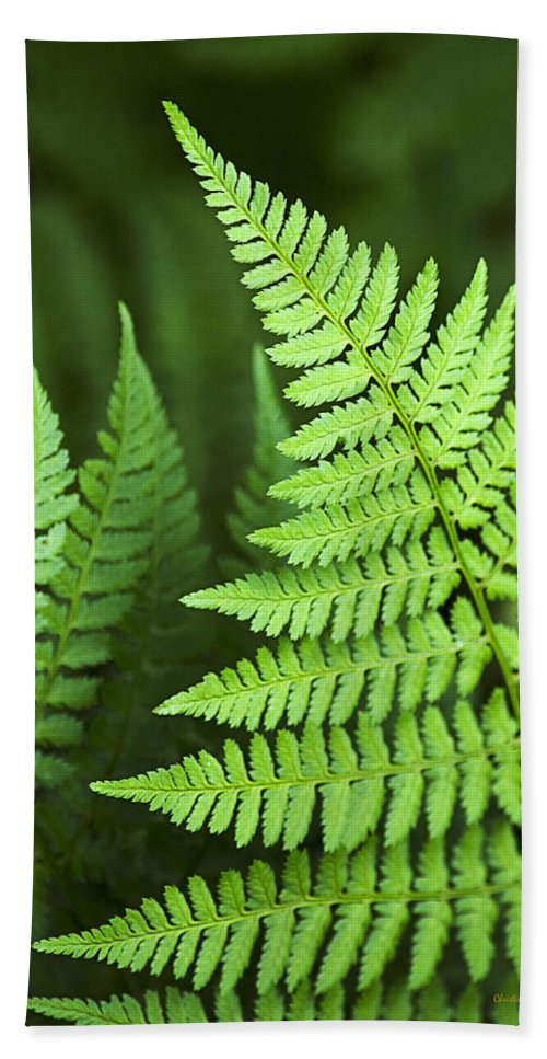 Fern Beach Towel featuring the photograph Curved Fern Leaf by Christina Rollo