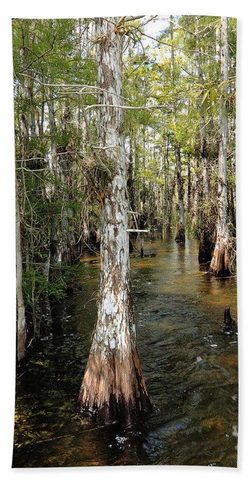 Beautiful Beach Towel featuring the photograph Cypres Swamp-1 by Rudy Umans