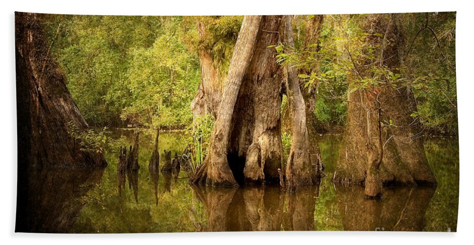 Water Beach Towel featuring the photograph Cypress by Scott Pellegrin
