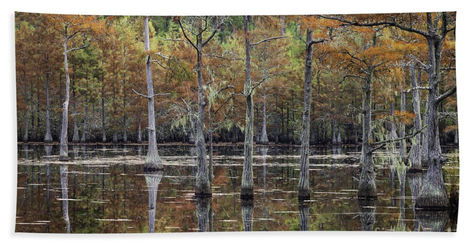 Cypress Trees Beach Towel featuring the photograph Cypress Tree Fall Reflections by Maria Struss