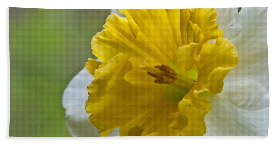 Daffodil Beach Towel featuring the photograph Daffodil by Randy Walton