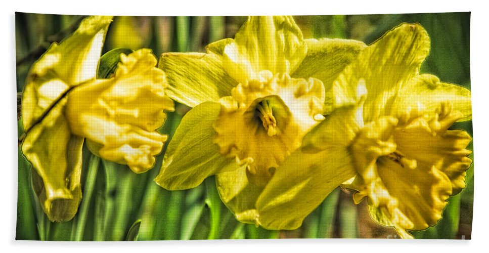 Flowers Beach Towel featuring the photograph Daffy Dills by Timothy Hacker