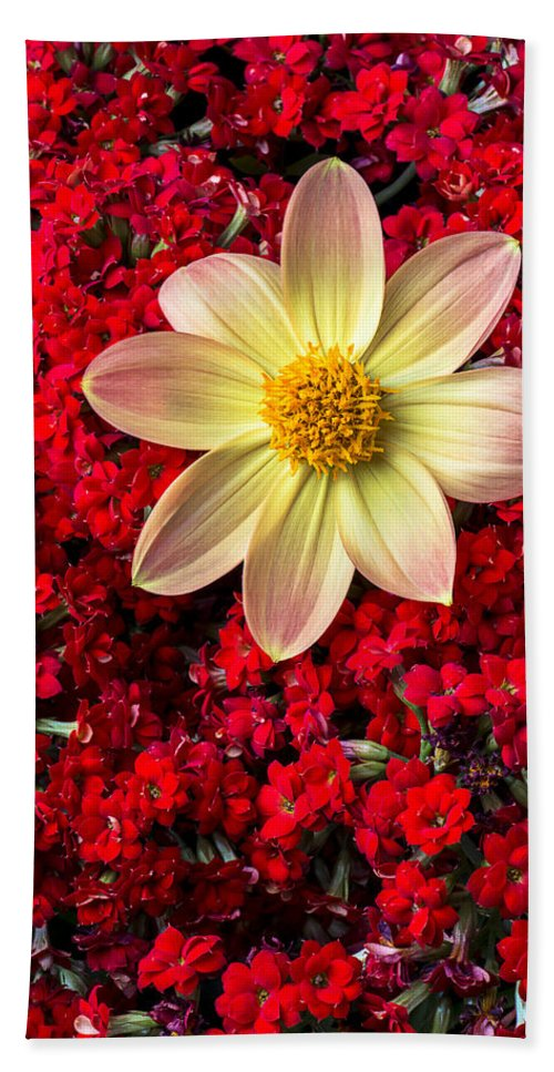 Dahlia Beach Towel featuring the photograph Dahlia And Kalanchoe by Garry Gay