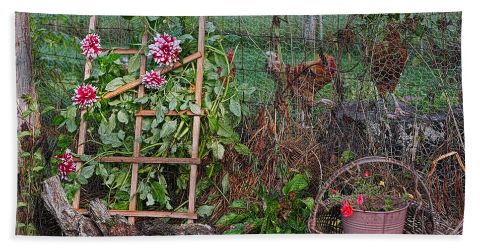 Flowers Beach Towel featuring the photograph Dahlias And Chickens by Denise Romano