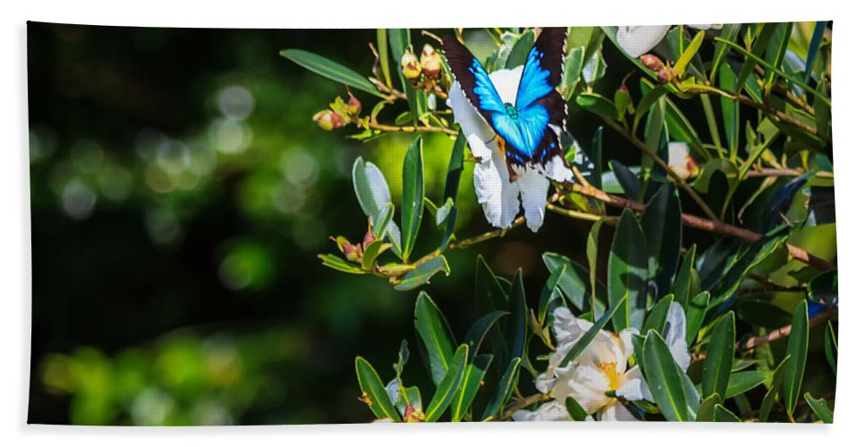 Nature Beach Towel featuring the photograph Daintree Monarch Butterfly by Silken Photography