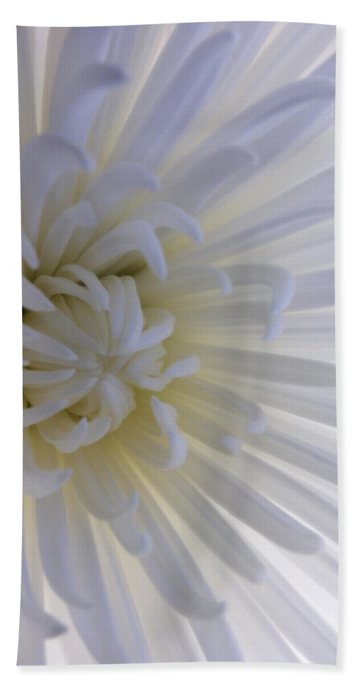 Flowers Beach Towel featuring the photograph Daisy Dream Glow by Joseph Hedaya