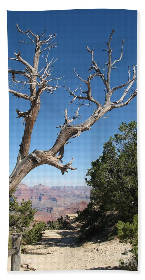 Trees Beach Towel featuring the photograph Dead Tree At Grand Canyon South Rim by Christiane Schulze Art And Photography