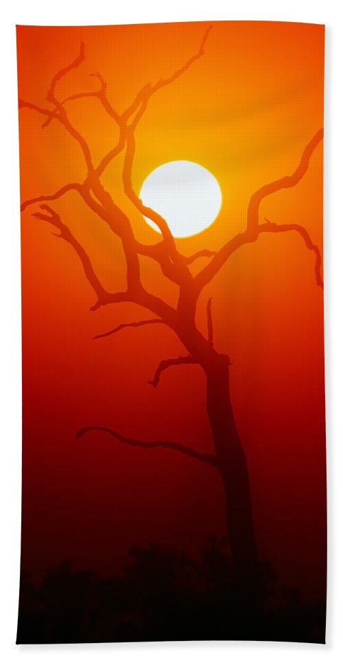 Tree Beach Sheet featuring the photograph Dead Tree Silhouette And Glowing Sun by Johan Swanepoel