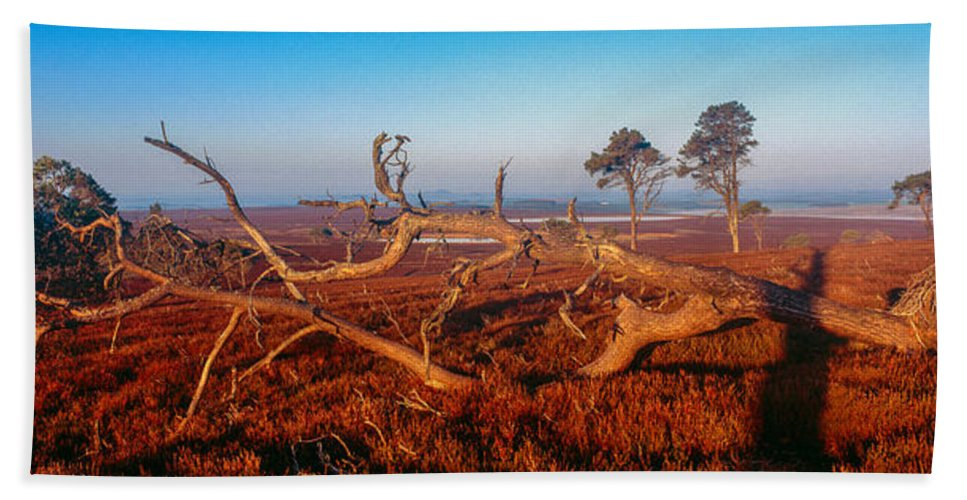 Photography Beach Towel featuring the photograph Dead Trees, Southern Uplands by Panoramic Images