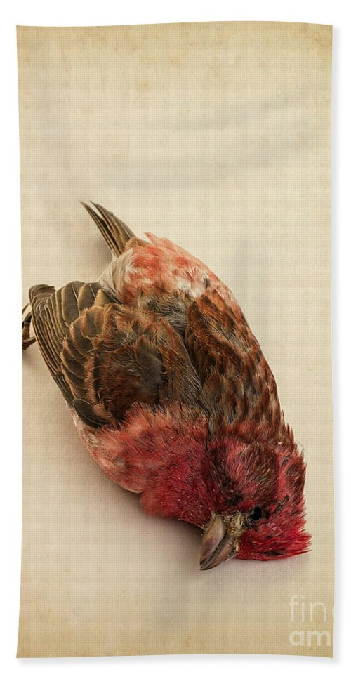 Bird Beach Towel featuring the photograph Death Of The Innocent by Edward Fielding