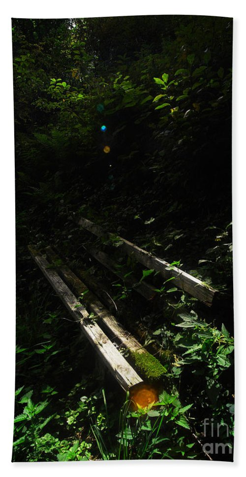 Forest Beach Towel featuring the photograph Deep In The Woods by Andy Prendy