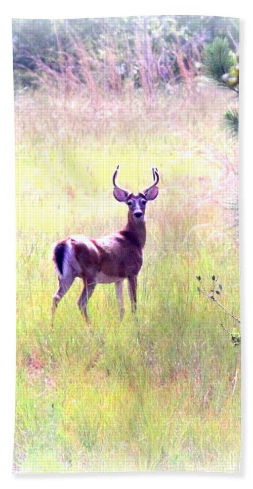 Deer - Buck - White-tailed Beach Towel featuring the photograph Deer - Buck - White-tailed by Travis Truelove