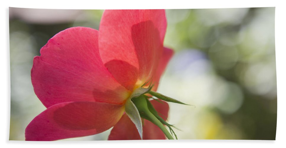Rose Beach Towel featuring the photograph Delicacy by Belinda Greb