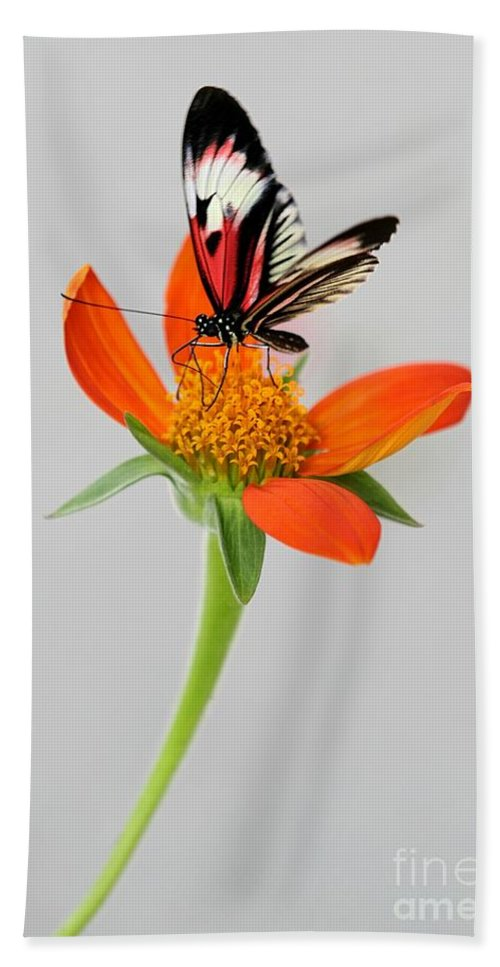 Piano Key Beach Towel featuring the photograph Delicate Beauty by Sabrina L Ryan