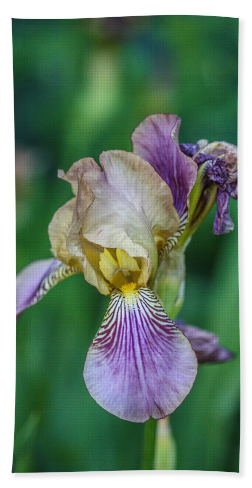 Maine Beach Towel featuring the photograph Delicate Iris by Jane Luxton