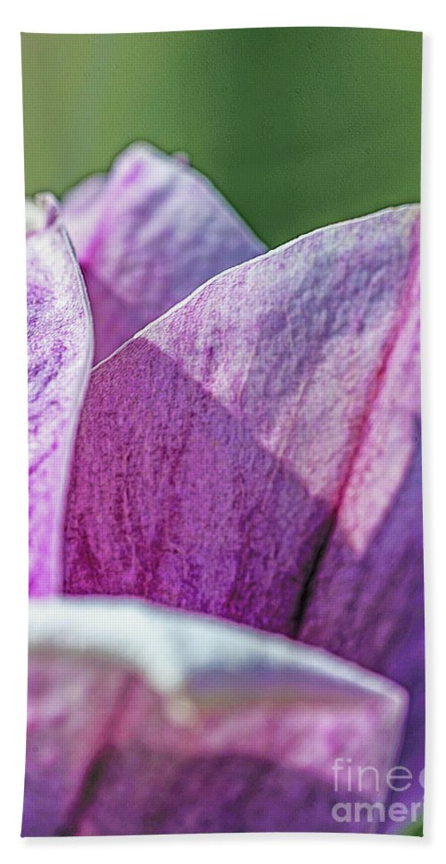 Petals Beach Towel featuring the photograph Delicate Nature by Elvis Vaughn