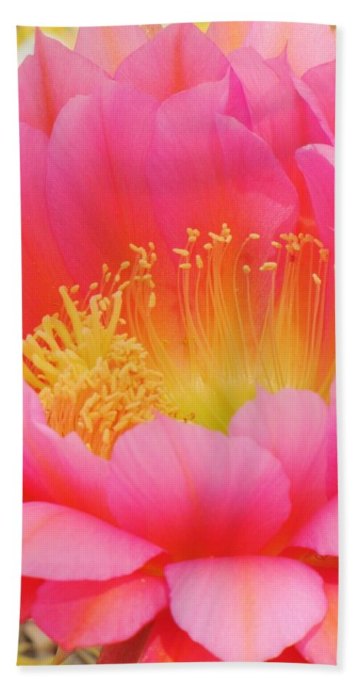 Cactus Flower Beach Towel featuring the photograph Delicate Pink Cactus Flower by Michelle Cassella