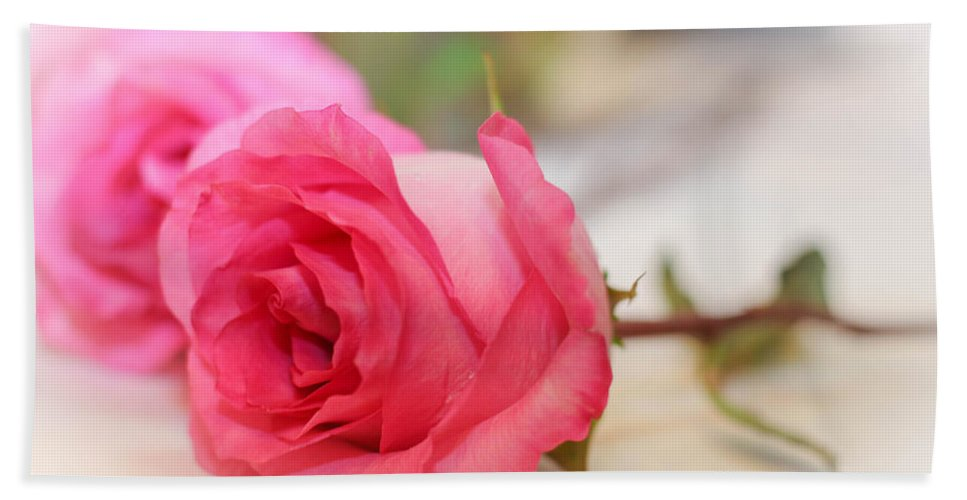 Delicate Rose Beach Towel featuring the photograph Delicate Rose by Mechala Matthews