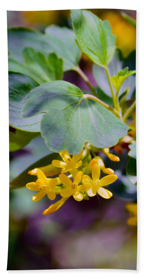 Exotic Beach Towel featuring the photograph Delicate Yellow Flowers by Brent Dolliver