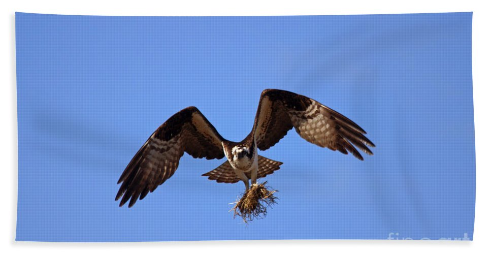 Osprey Beach Towel featuring the photograph Delivery By Air by Mike Dawson
