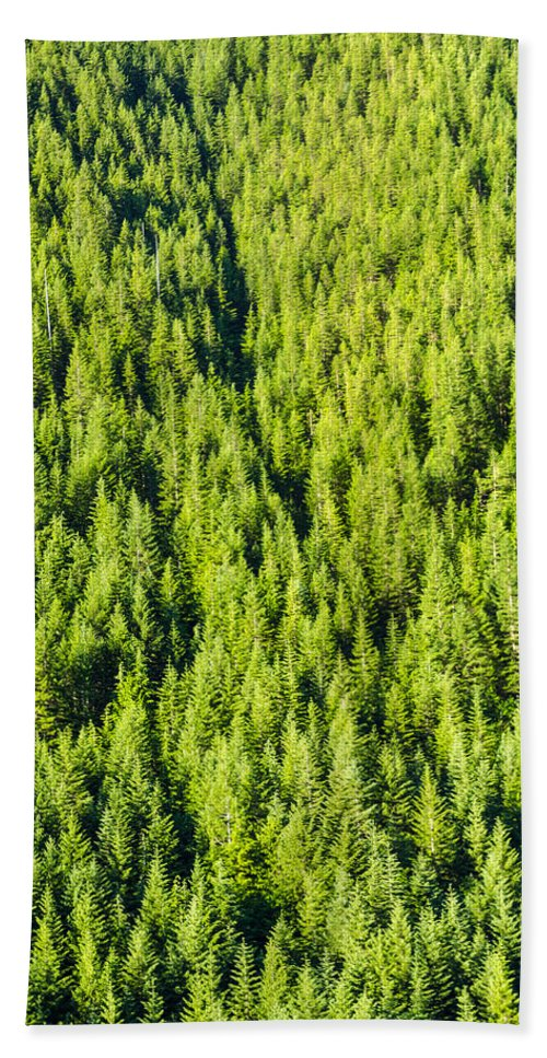 Forest Beach Towel featuring the photograph Dense Forest by Jess Kraft