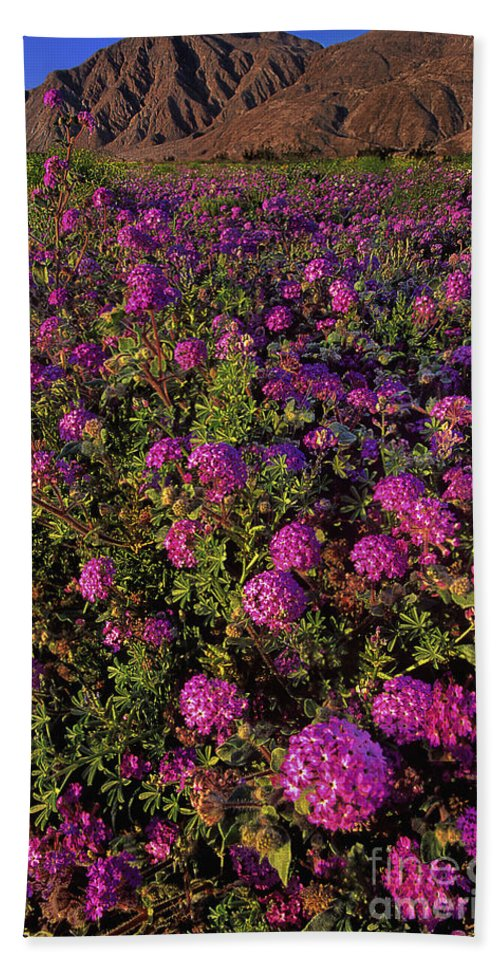 Desert Sand Verbena Beach Towel featuring the photograph Desert Sand Verbena Wildflowers by Dave Welling