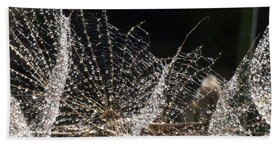 Dew Beach Towel featuring the photograph Dewy Seed Parachutes by Richard Thomas