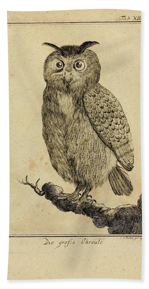 Owl Beach Towel featuring the drawing Die Grosse Ohreale by Philip Ralley