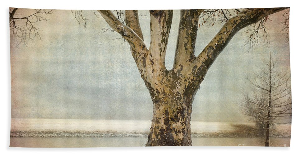 Tree Beach Towel featuring the photograph Dignity by Betty LaRue